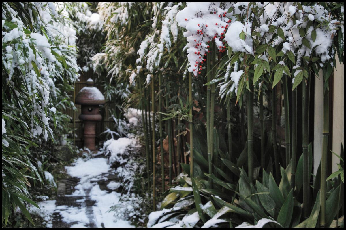 雪景色 <京都>_f0021869_6533357.jpg