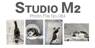 STUDIO M2 Photo File No.084「Prince SUKE」_a0002672_1223387.jpg