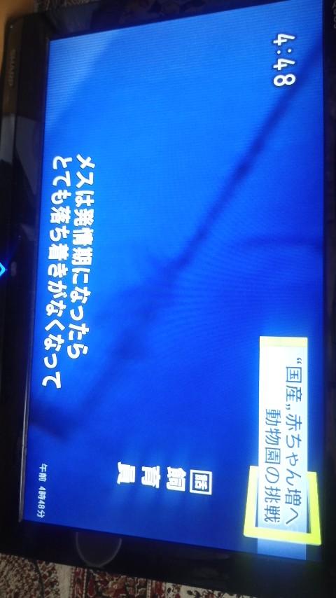 a0255577_4501561.jpg