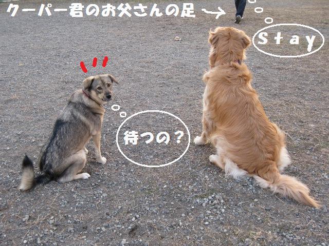 f0230380_20102132.jpg