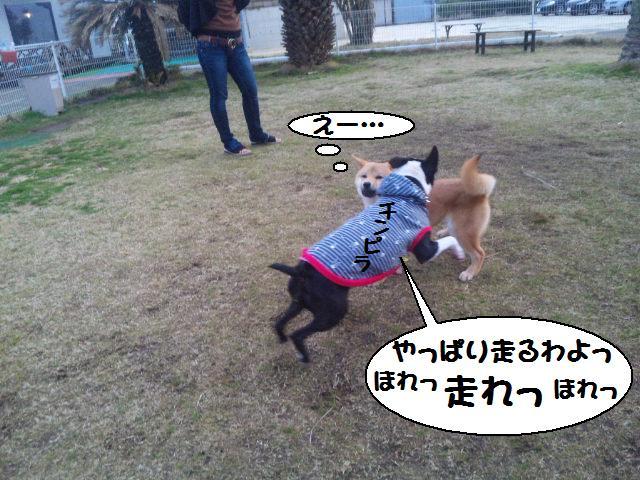★しぶごえ千倉 ; 看板犬ボステリ日向ちゃんの技★_d0187891_2254516.jpg