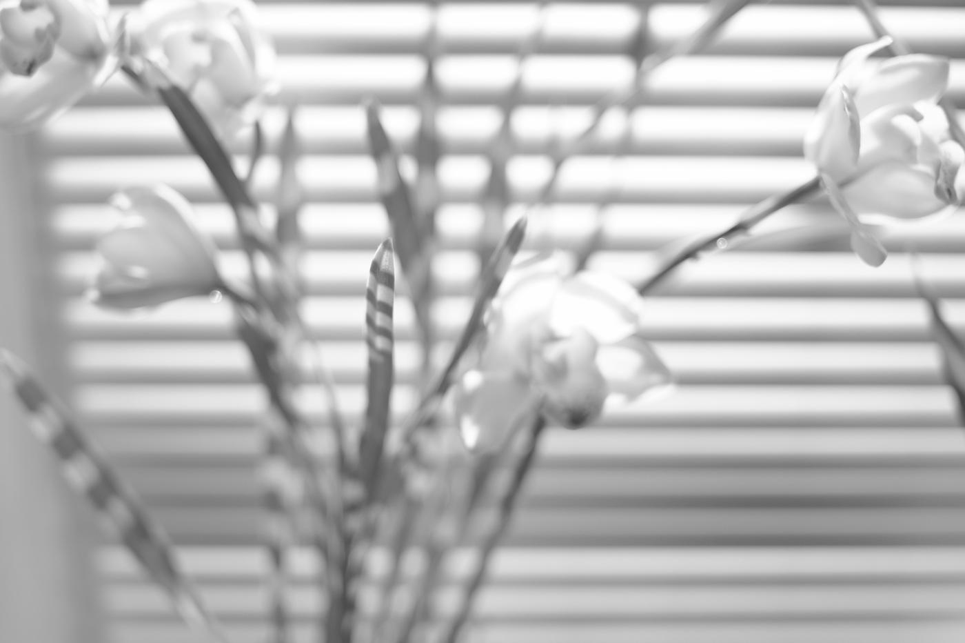 広尾の花、その23。_c0120903_15265336.jpg