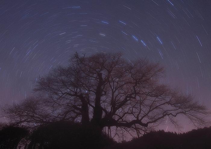 """""""醍醐櫻と星""""_a0140608_8325523.jpg"""