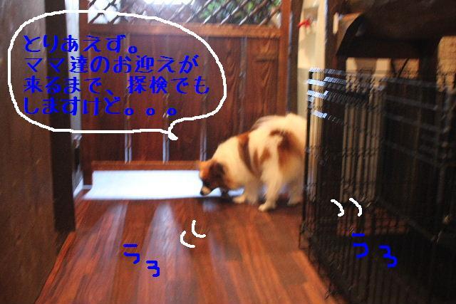 b0130018_1533951.jpg