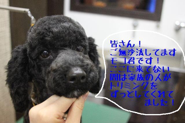 b0130018_1563048.jpg