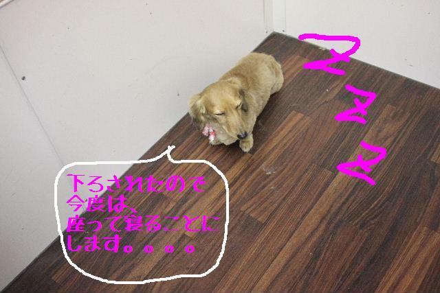 b0130018_17264167.jpg