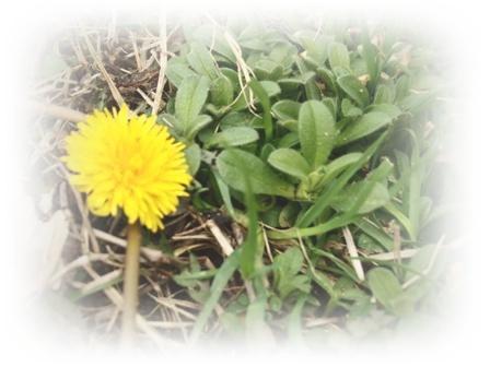 春を探しに・・・♪_c0232619_18194865.jpg