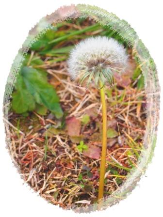 春を探しに・・・♪_c0232619_1820563.jpg
