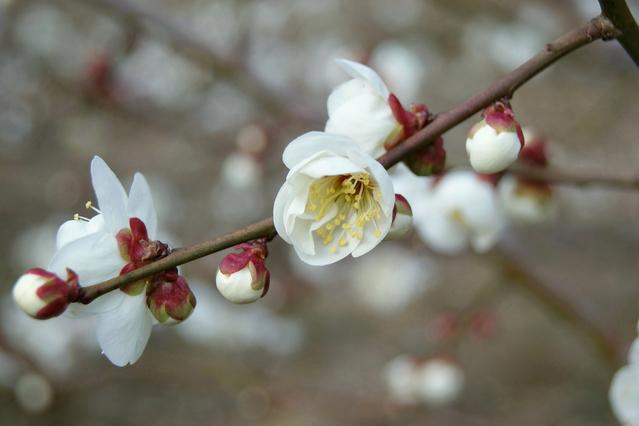 木の芽起こしの雨_f0092320_23271967.jpg