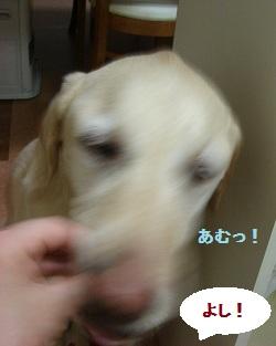 b0226221_1972649.jpg
