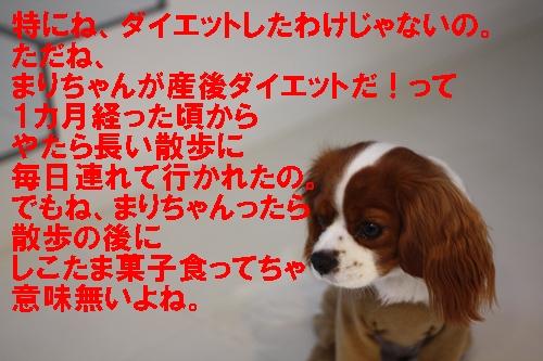 d0165124_20101739.jpg