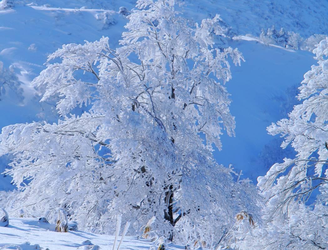 冬の箕輪山の風景_d0106628_196772.jpg