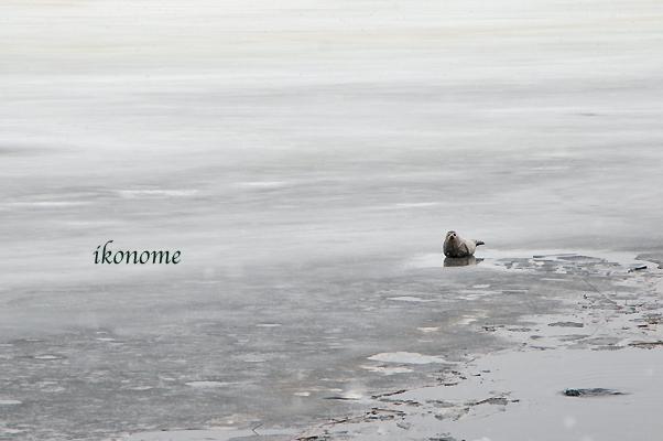 流氷〜!_e0075145_1083232.jpg