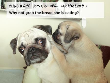 パグの兄妹のひそひそ話 Secret Talk of Pug Bro & Sis_b0190666_22434769.jpg