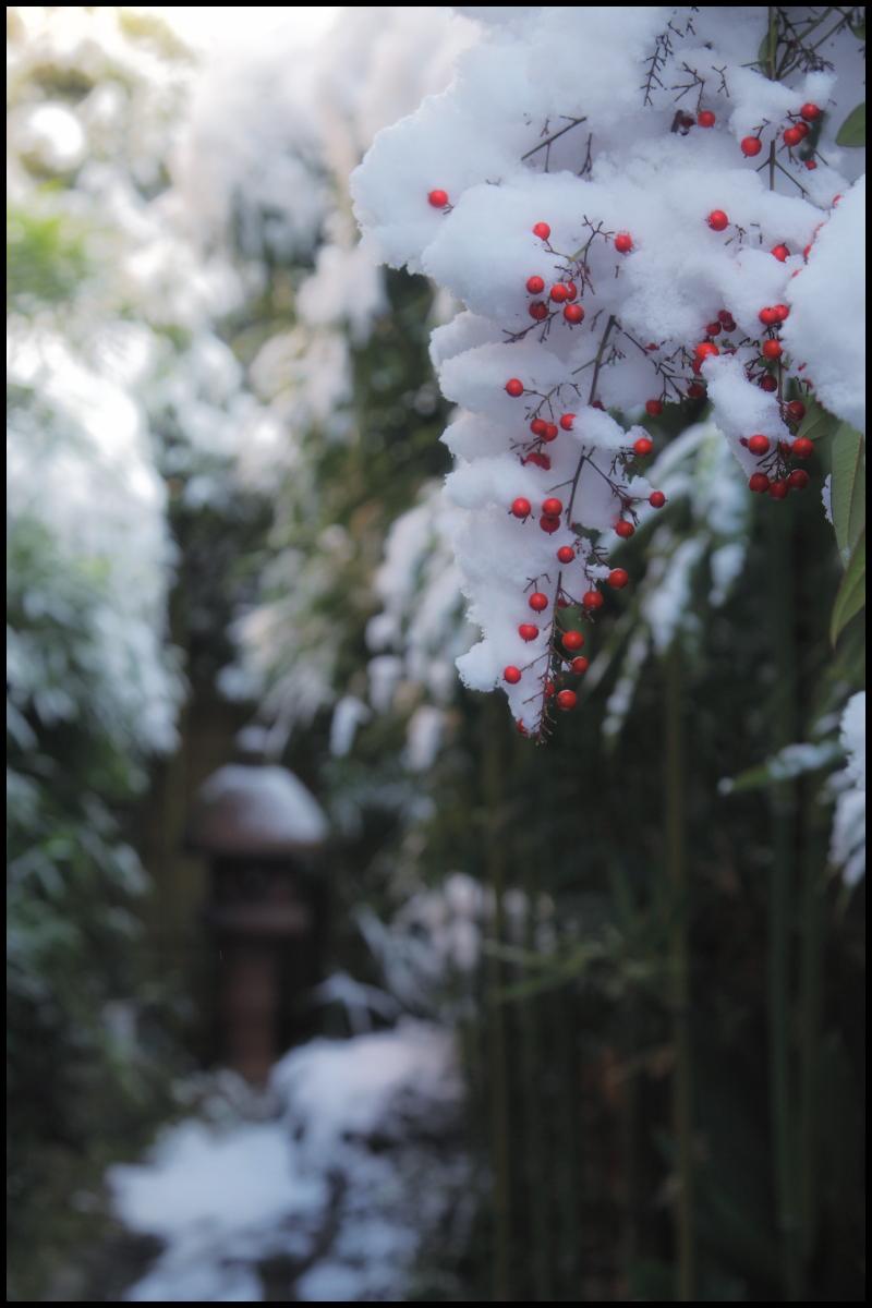 雪景色 <京都>_f0021869_22114438.jpg