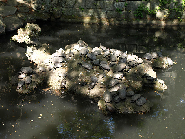 成田山 新勝寺 (2/12)_b0006870_1729948.jpg