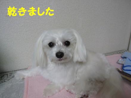 b0193480_1520277.jpg