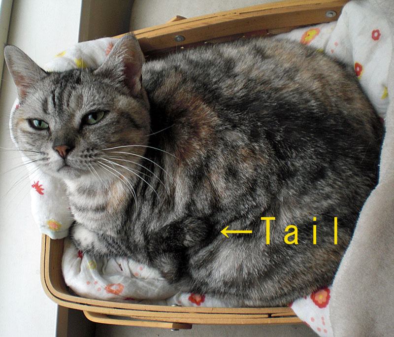 The tail_b0195783_11475339.jpg