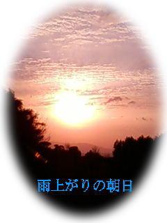 d0070316_142227.jpg