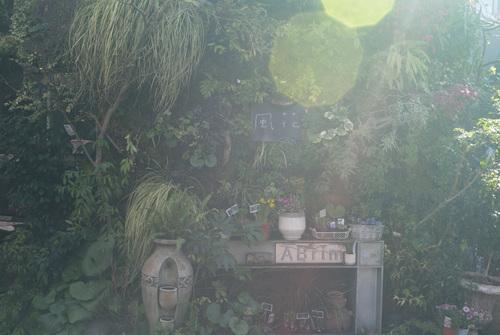 花屋の軒先が可愛い_b0212922_19241018.jpg