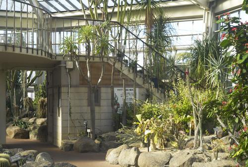 植物園_b0212922_19455337.jpg