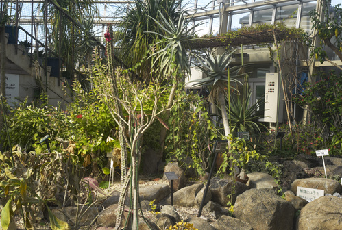 植物園_b0212922_19461683.jpg
