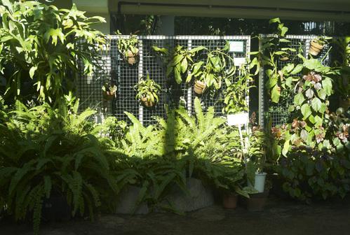 植物園_b0212922_19463541.jpg