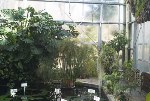 植物園_b0212922_19465123.jpg