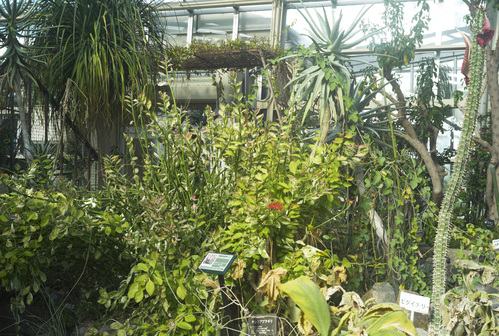 植物園_b0212922_19471285.jpg