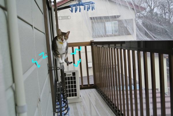 猫のバランス_a0099131_0581760.jpg