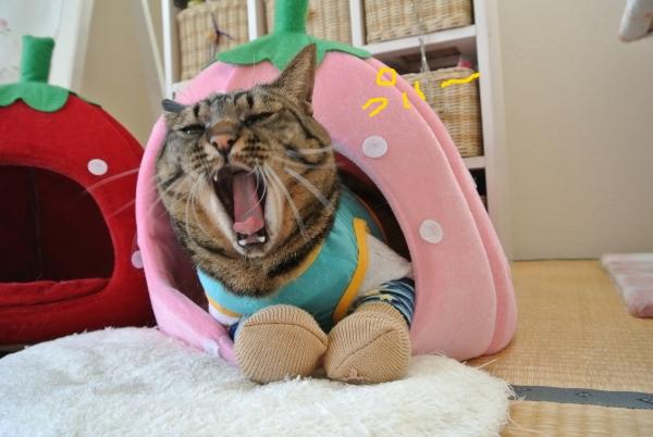 猫のバランス_a0099131_058256.jpg