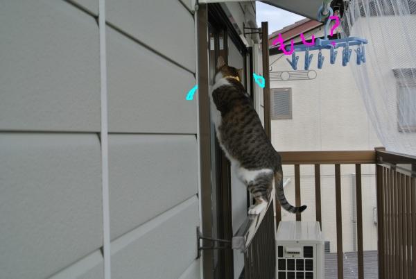 猫のバランス_a0099131_0583112.jpg