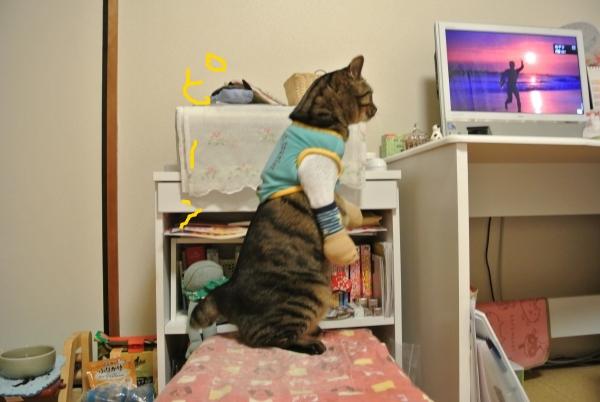 猫のバランス_a0099131_059534.jpg