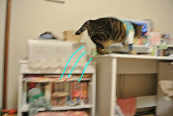 猫のバランス_a0099131_101690.jpg