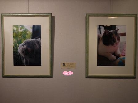 猫のお友だち マミちゃん編 画廊喫茶三点鐘。_a0143140_214546.jpg