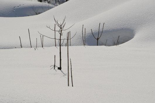 雪模様1_c0093046_18542412.jpg