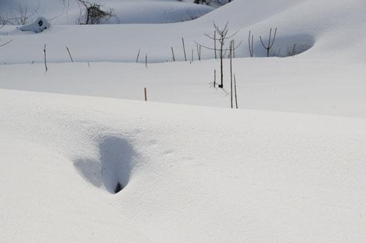 雪模様1_c0093046_1854585.jpg