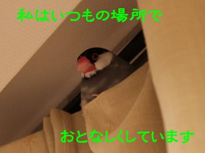 b0158061_21453077.jpg