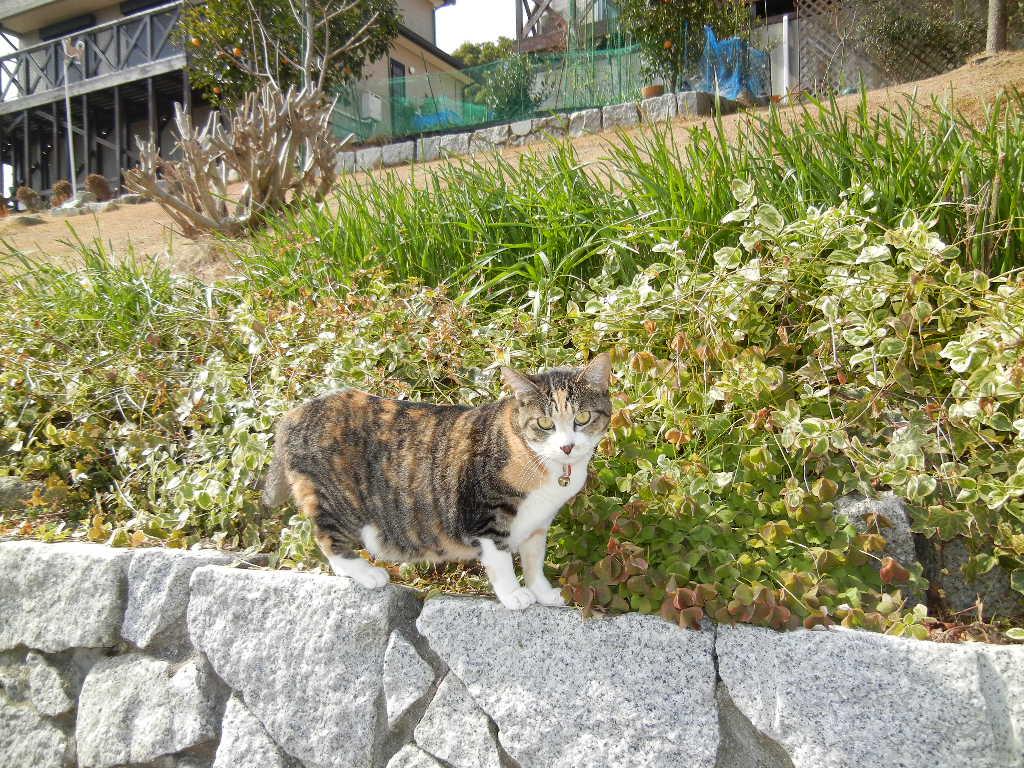 2012年2月24日(金)やっとお天気になったよ~!_f0060461_13173639.jpg
