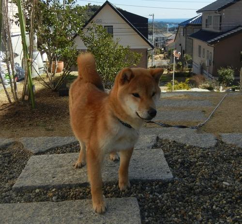 2012年2月24日(金)やっとお天気になったよ~!_f0060461_13274638.jpg