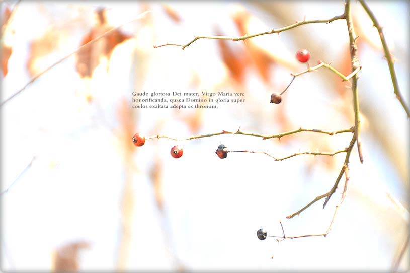 f0198771_061038.jpg