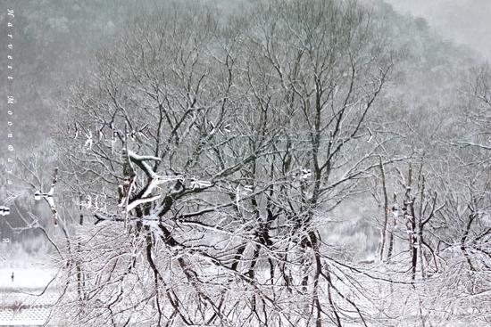 Pieces  of Winter~逆さまの世界_b0208495_2320582.jpg