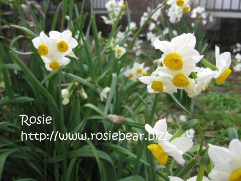 b0032098_8181380.jpg