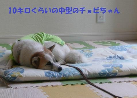 f0121712_1741032.jpg