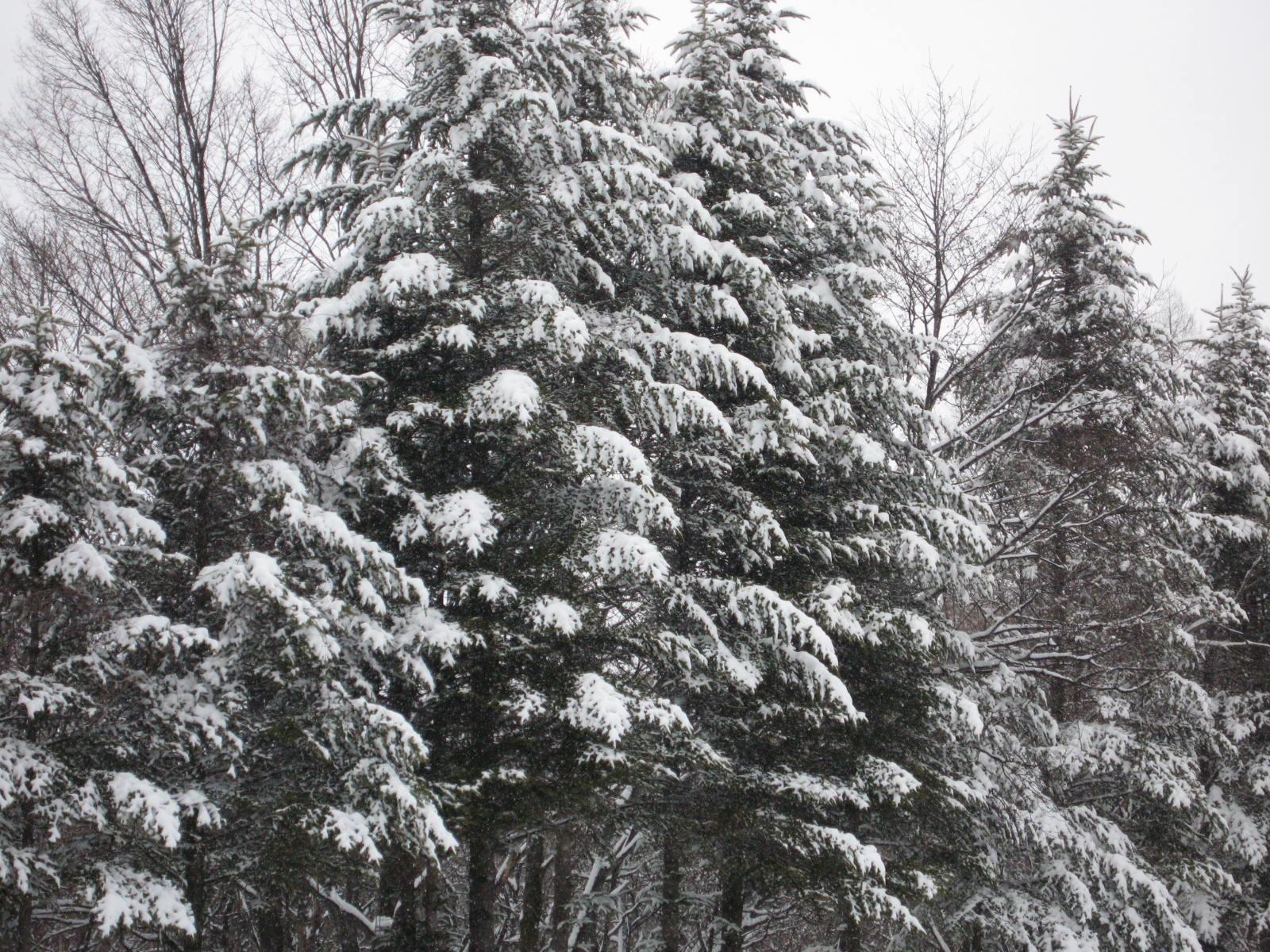 今シーズン一番の雪_f0146620_1537081.jpg