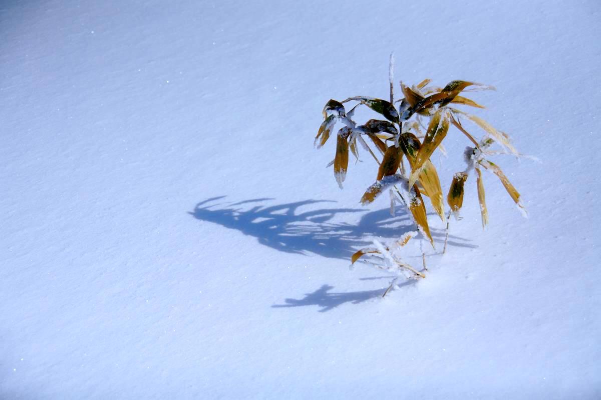 厳冬の箕輪山の風景_d0106628_1358723.jpg