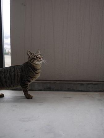猫のお友だち ちゃーくんちょびくんペコちゃん編。_a0143140_15173951.jpg