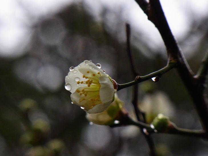 2月25日(雨一時くもり)タイトル:ホームページ開設10周年_f0105542_1829319.jpg