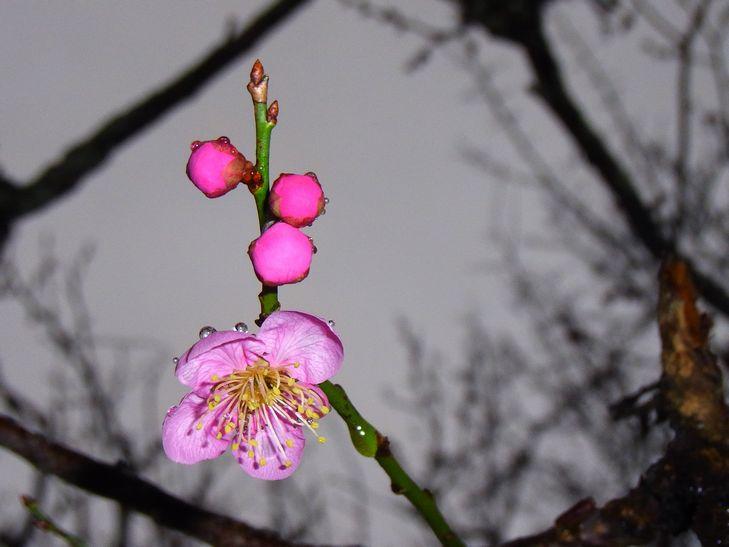 2月25日(雨一時くもり)タイトル:ホームページ開設10周年_f0105542_18323541.jpg