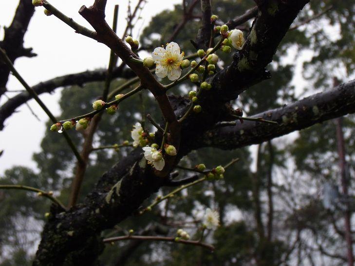 2月25日(雨一時くもり)タイトル:ホームページ開設10周年_f0105542_1833877.jpg